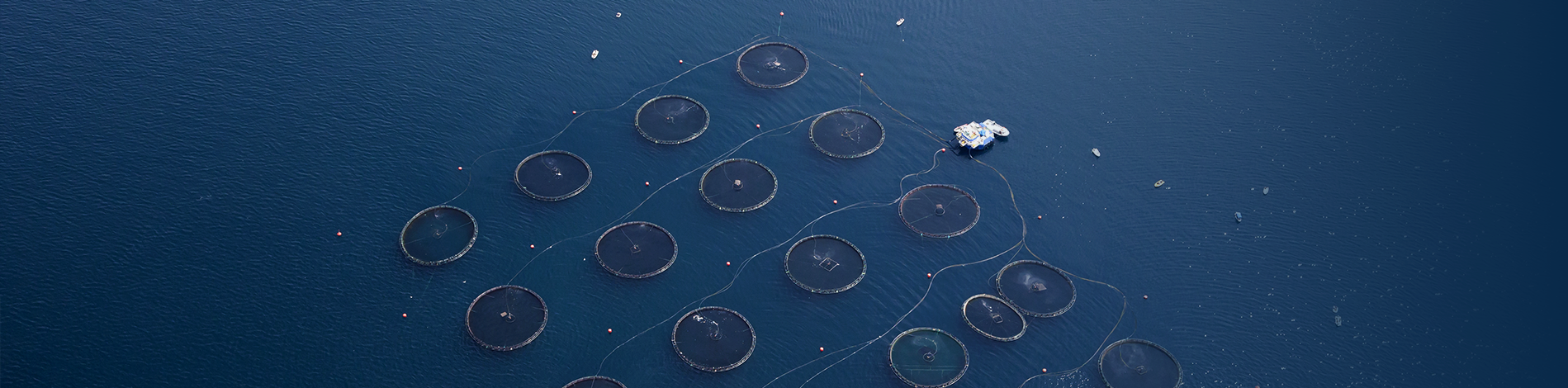 Aquaculture and fish farming